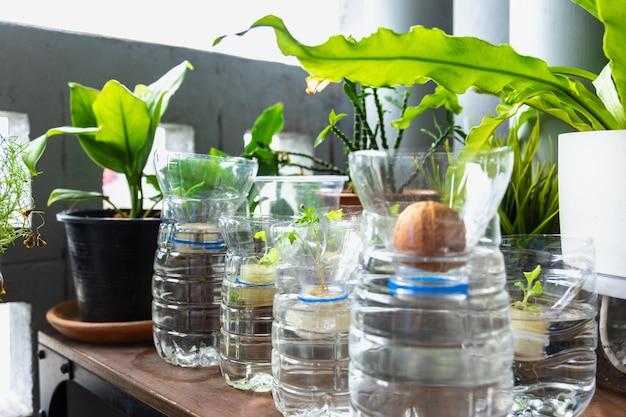 Ricicla le bottiglie di plastica è un vaso per piantare alberi salva la terra e la protezione dell'ambiente