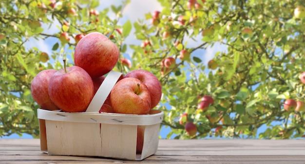 Mele rosse nel canestro su un tavolo di legno davanti al ramo e fogliame di melo