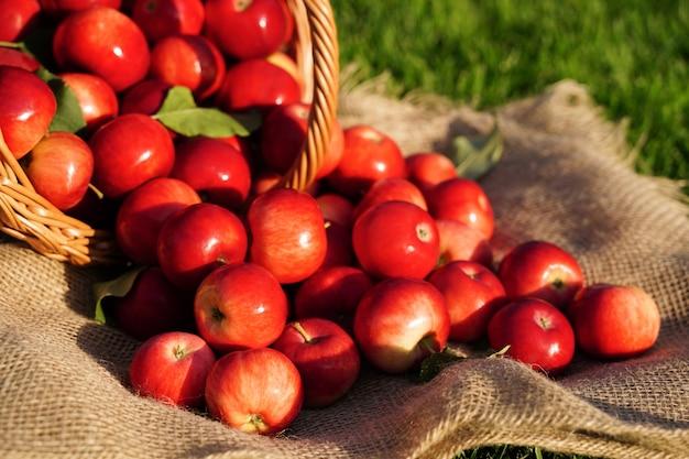 Mele rosse in un cesto di vimini closeup messa a fuoco selettiva su una mela sfocata concetto di messa a fuoco dello sfondo ...