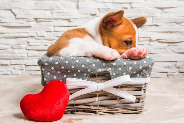 Cucciolo di cane basenji rosso nel cestino con cuore rosso