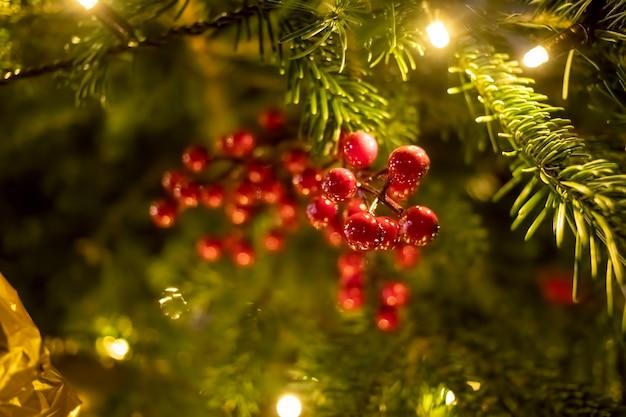 Bacche rosse ramo closeup decorazione ramo di abete. sullo sfondo i rami di un albero di natale e capodanno con luci sfocate. primo piano, messa a fuoco morbida,