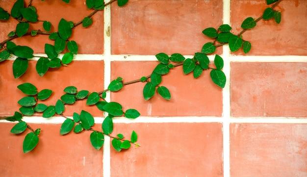 Muro di mattoni rossi con piante rampicanti di foglie di piante verdi