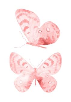 Farfalle rosse isolate su priorità bassa bianca. falene tropicali