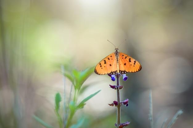 Farfalla rossa sui fiori con lo sfondo della natura