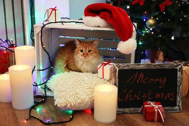 Gatto rosso sul cuscino senza pavimento in legno e superficie con decorazioni natalizie