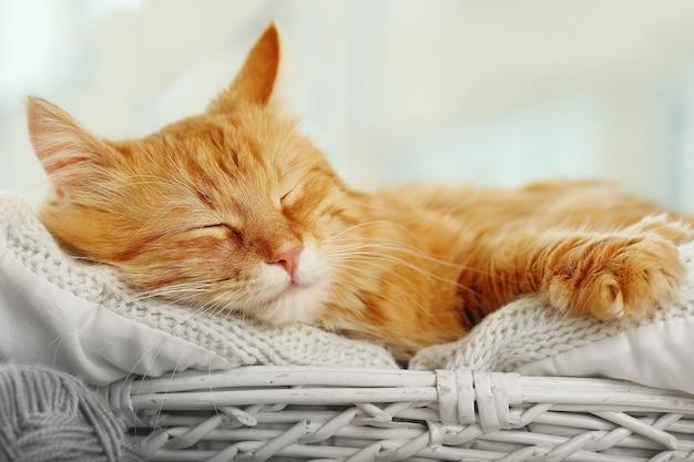 Gatto rosso che riposa all'interno