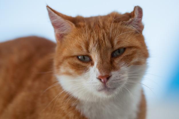Un gatto rosso siede su una casa nell'arcipelago di santorini.