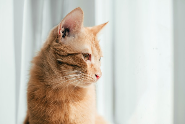 Il gatto rosso si siede sul davanzale della finestra e guarda fuori dalla finestra