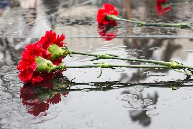 Crisantemi rossi su granito nero sotto la pioggia. celebrazione dell'anniversario della vittoria nella grande guerra patriottica. la gente depone fiori in memoria dei soldati morti.