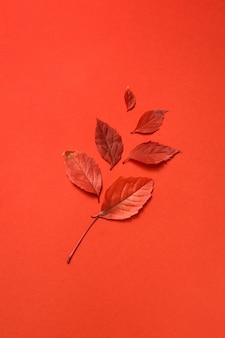 Foglia d'uva autunnale di colore rosso con ombre morbide