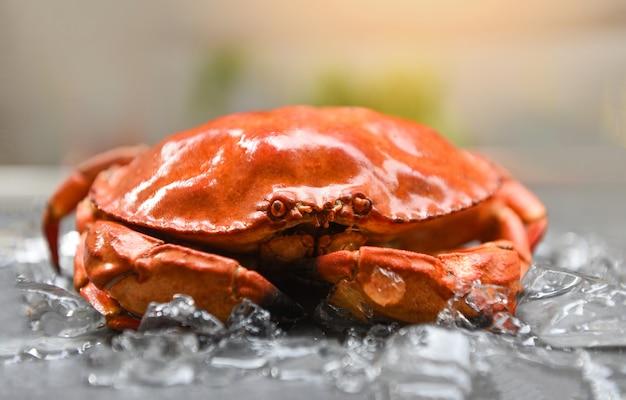 Granchi rossi su ghiaccio - primo piano di granchio di pietra al vapore nel ristorante di pesce