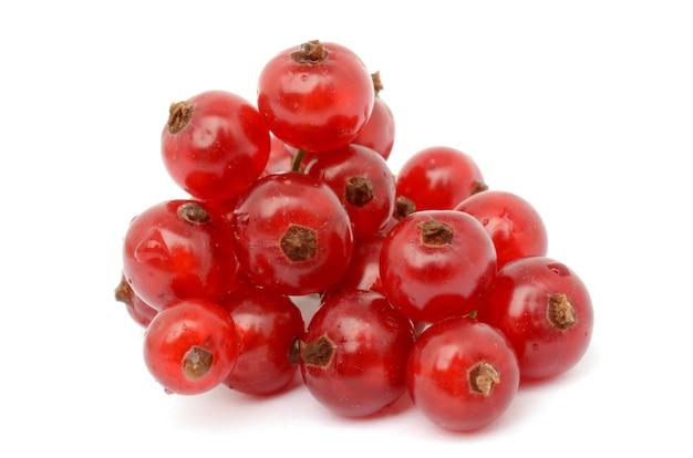 Ribes rosso isolato su bianco