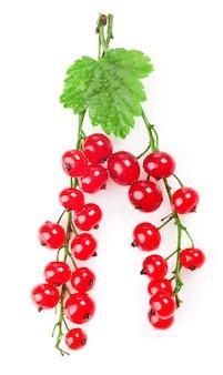 Ribes rosso con una foglia su uno sfondo bianco