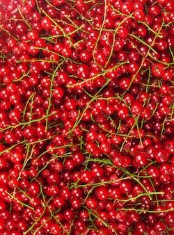 Ribes rosso con una foglia su una superficie bianca