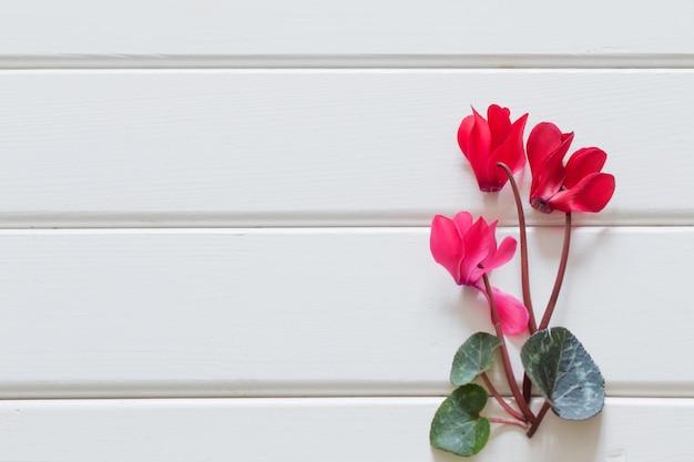 Ciclamino rosso sulla tavola di legno