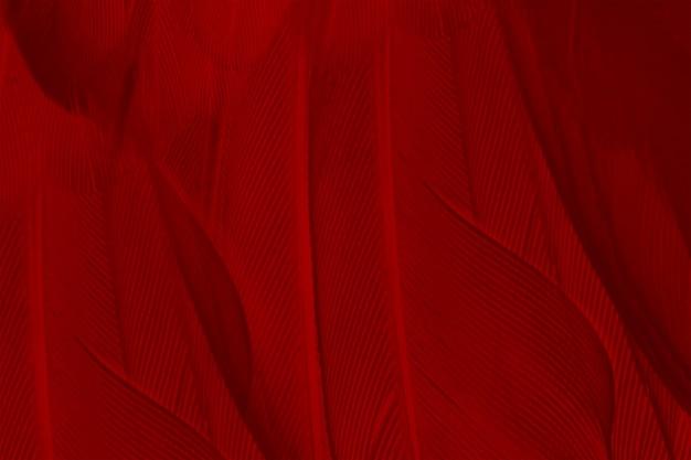 Sfondo rosso piuma trama