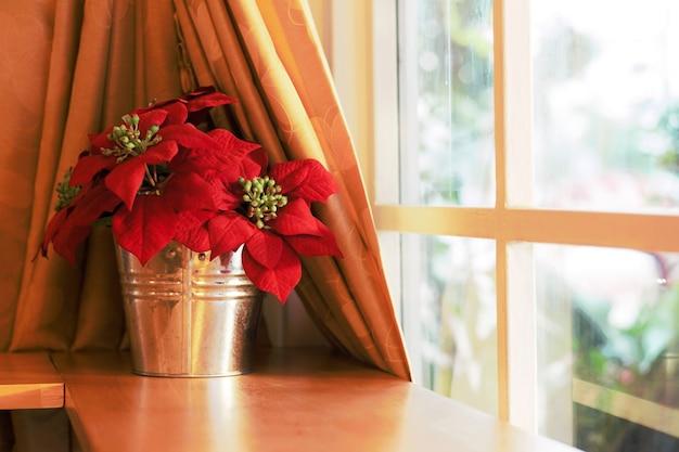 Fiore rosso nella caffetteria