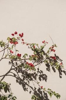Pianta di fiori rossi e ombre di luce solare sul muro beige neutro