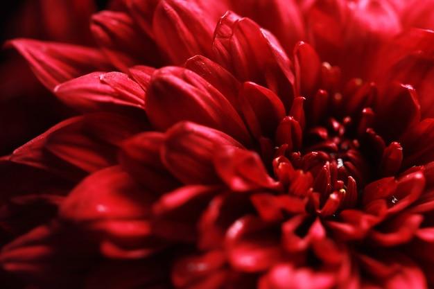 Fiore rosso con sfondo scuro