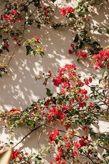 Fiori rossi sulla parete beige con ombre di luce solare