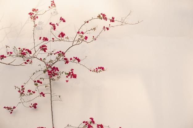Ramo di fiori rossi, foglie su muro di cemento beige neutro