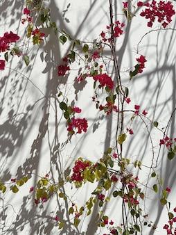 Fiori rossi e ombre di luce solare sul muro beige neutro