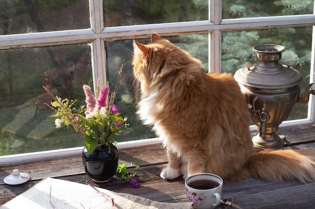 Gatto rosso lanuginoso seduto sul tavolo della terrazza nella casa di campagna e guardando nella finestra in una giornata estiva