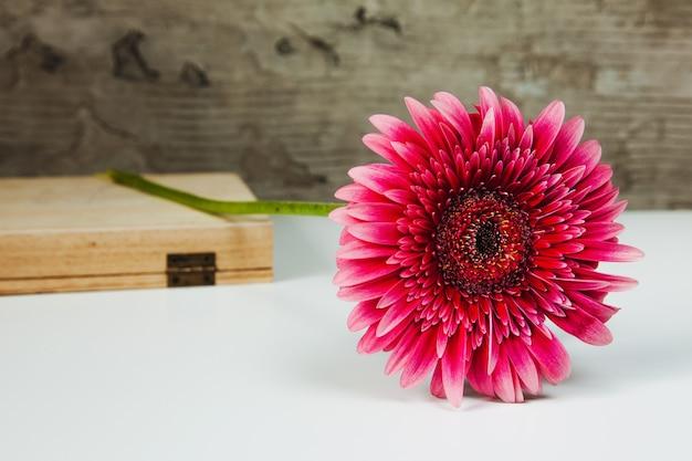 Fiore di gerbera rosso su sfondo bianco con una scatola di legno, sfondo grigio cemento.
