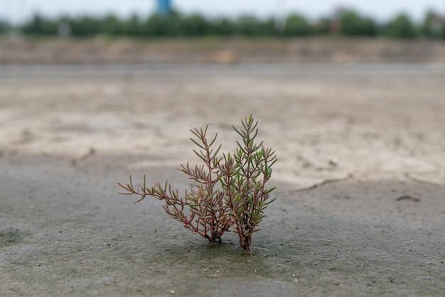 Piante rosse o verdi su terreno alcalino salino
