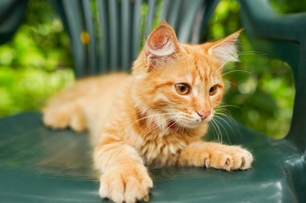 Gattino rosso che si siede nella sedia verde, priorità bassa della natura