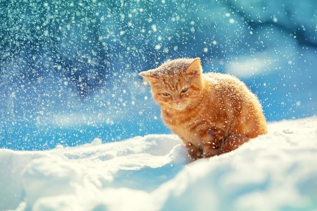Gattino rosso seduto sulla neve nella bufera di neve