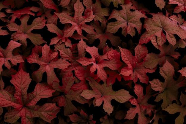 Sfondo foglia rossa sfondo natura tropicale concept