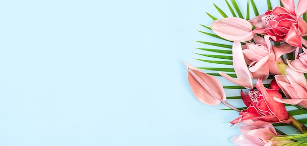 Rosso e rosa fiore tropicale torcia zenzero (etlingera elatior) e rosa flomingo fiore su sfondo blu, spazio di copia