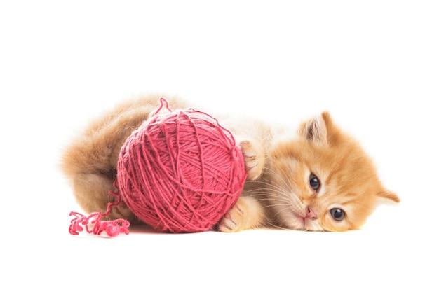 Gattino rosso allegro con gomitolo di lana viola, è sdraiato su bianco