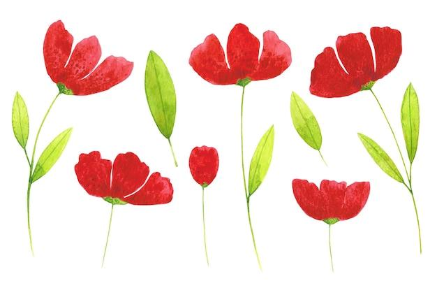 Papaveri rossi e foglie verdi clip art set isolato su sfondo bianco.