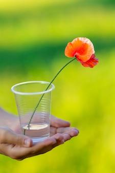 Papavero rosso su una gamba lunga e sottile immersa nell'acqua in un bicchiere di plastica nelle mani di un bambino