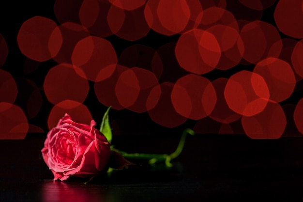 Rosa rossa sugli sfondi del boke