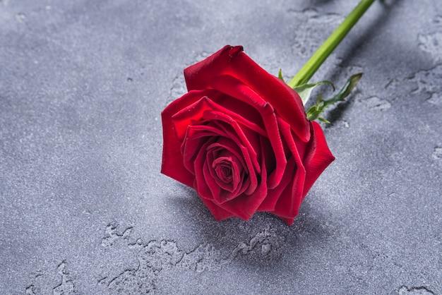 Rosa rossa su sfondo greay