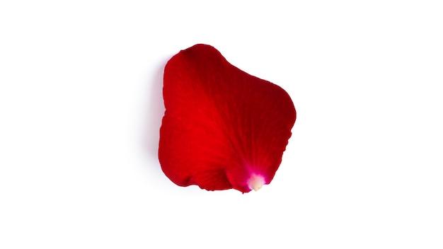 Petalo di rosa rossa isolato su uno sfondo bianco. petali volanti. foto di alta qualità