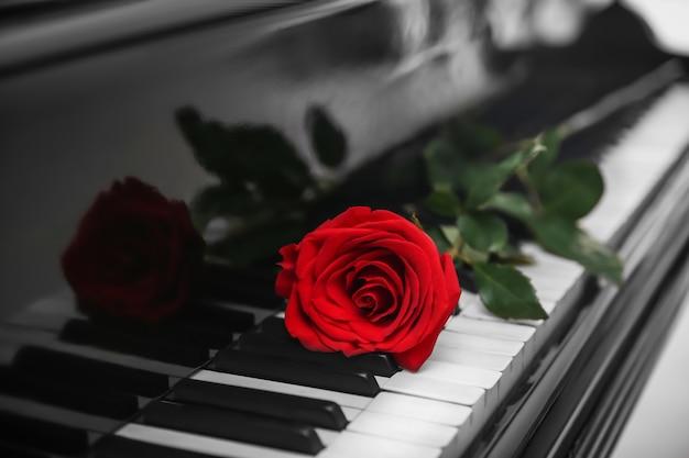 Rosa rossa sui tasti del pianoforte, da vicino