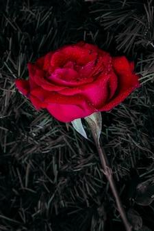 Rosa rossa con gocce d'acqua appoggiata su una superficie di fili verdi parzialmente desaturati.