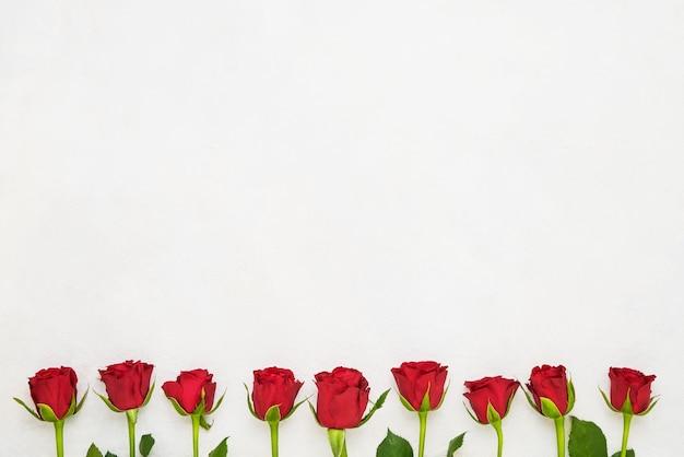 Bordo delle rose rosse su bianco