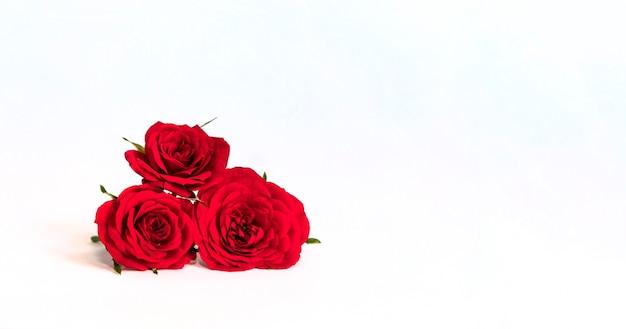 Rose rosse isolate su priorità bassa bianca