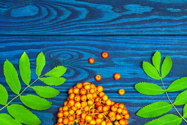 Bacche di sorbo rosse e foglie verdi su tavole blu con un posto per un'iscrizione