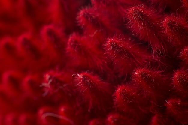 Spighette rosse chiudono il macro sfondo della natura macro