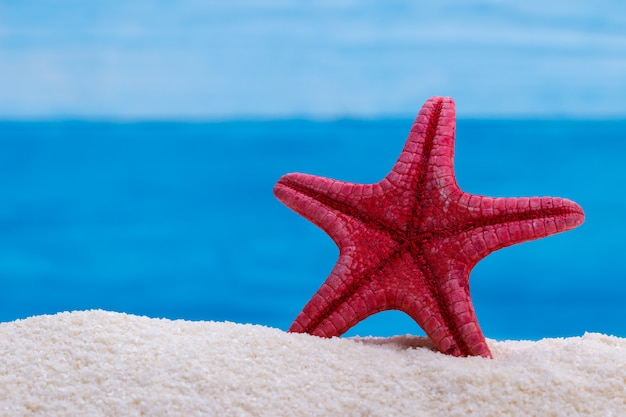 Stella marina rossa sulla sabbia bianca