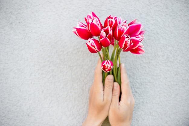 Tulipani rossi in mano femminile su sfondo bianco
