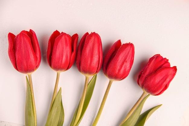 Fiori di tulipani rossi su sfondo bianco. vista dall'alto