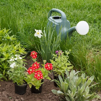 Fiori rossi di verbena e annaffiatoio in un letto da giardino con erba verde in superficie