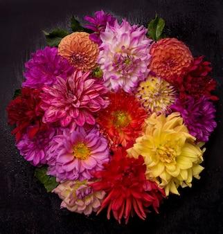 Dalia rossa, bianca, gialla agosto sfondo colorato. vista dei fiori multicolori della dalia.